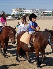 caval-oca-ane-57862.jpg