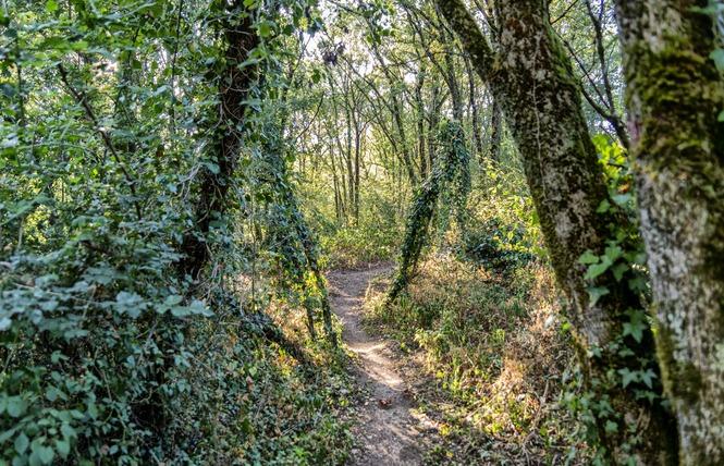 Camping Naturiste Le Colombier 21 - Saint-Martin-Lars-en-Sainte-Hermine