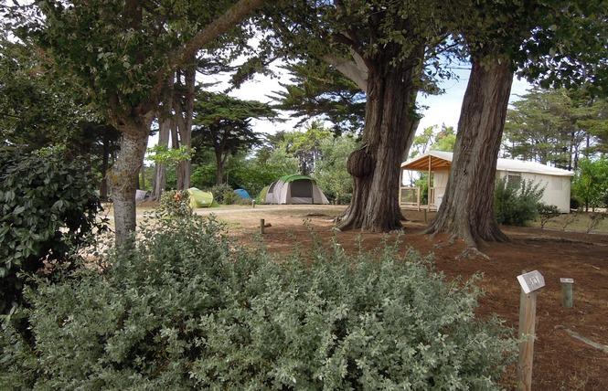 Camping Municipal DE L'ILE D'YEU 16 - L' Île-d'Yeu