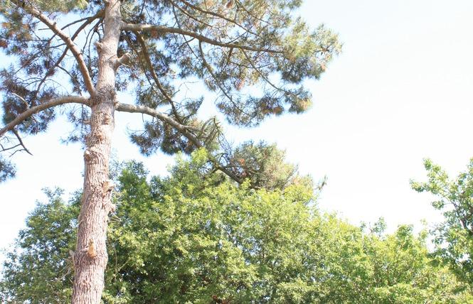 Camping LA PAREE PRENEAU 8 - Saint-Hilaire-de-Riez