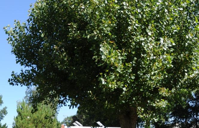 Camping LA PAREE PRENEAU 7 - Saint-Hilaire-de-Riez